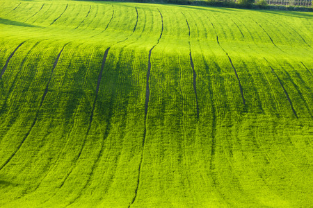 spring field, Southern Moravia, Czech Republic