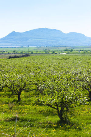 spring orchard and Palava at background, Czech Republic photo