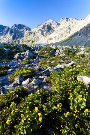 tatras tatry: Mengusovska Valley, Vysoke Tatry (High Tatras), Slovakia