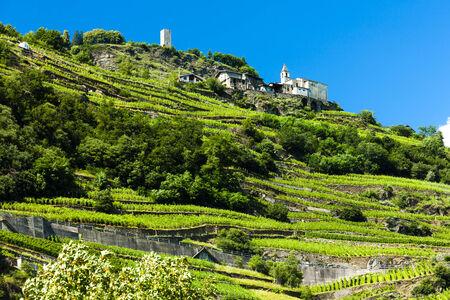 vineyars near San Giacomo Sudovest, Lombardy, Italy