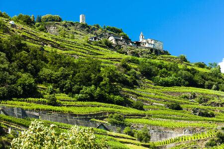 vineyars vicino San Giacomo Sudovest, Lombardia, Italia Archivio Fotografico