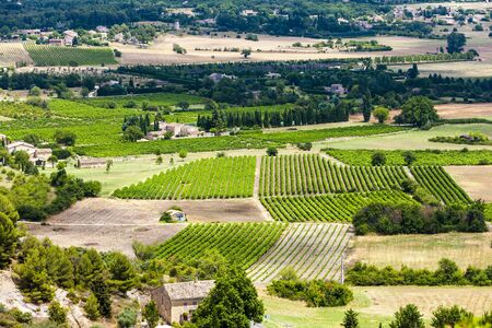 vaucluse: vineyards near Gordes, Vaucluse Department, Provence, France