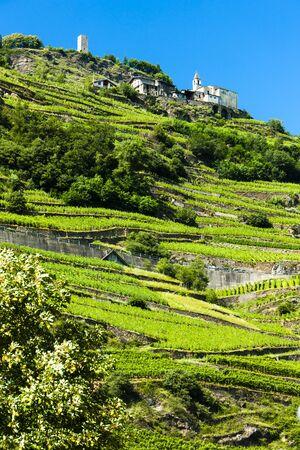 san giacomo: vineyars near San Giacomo Sudovest, Lombardy, Italy Stock Photo