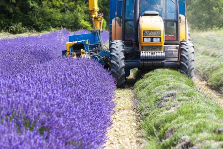 agricultural implements: lavender harvest, Rhone-Alpes, France