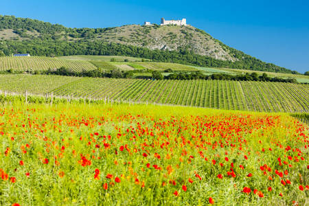 ruins of Devicky Castle with vineyards, Czech Republic Stock Photo