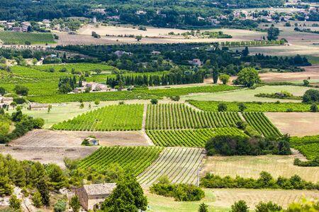 vaucluse: vineyards near Gordes, Vaucluse Department, Provence, France
