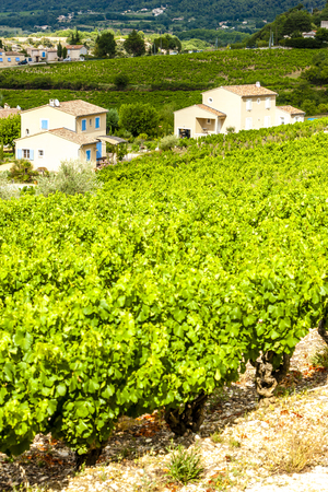 vaucluse: vineyards near Vaison-la-Romaine, Vaucluse Department, Provence, France Stock Photo