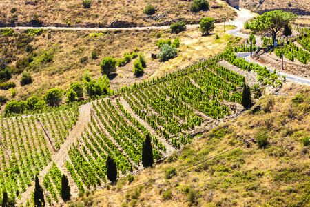 port vendres: vineyard on Cote Vermeille near Port-Vendres, Languedoc-Roussillon, France Stock Photo