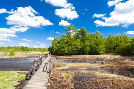 turf bog: Nature reserve called Soos, Czech Republic
