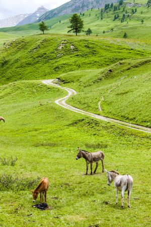 quietness: donkeys, landscape of Piedmont near French borders, Italy