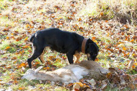atrapar: perro de caza con una captura