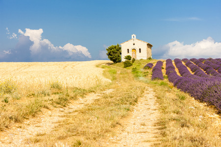 grain fields: chapel with lavender and grain fields, Plateau de Valensole, Provence, France