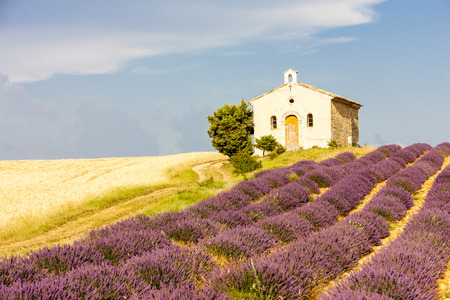 plateau of flowers: chapel with lavender and grain fields, Plateau de Valensole, Provence, France