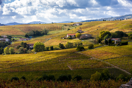 vignobles du Beaujolais, Rhône-Alpes, France