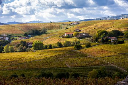 vineyards: vineyards of Beaujolais, Rhone-Alpes, France