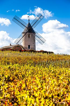 Chenas、ボジョレー、ローヌ ・ アルプ、フランスの近くの風車のあるブドウ園