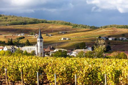 Chenas with vineyard, Beaujolais, Rhone-Alpes, France 写真素材