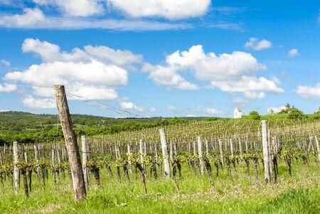 spring vineyard near Hnanice, Southern Moravia, Czech Republic Stock Photo