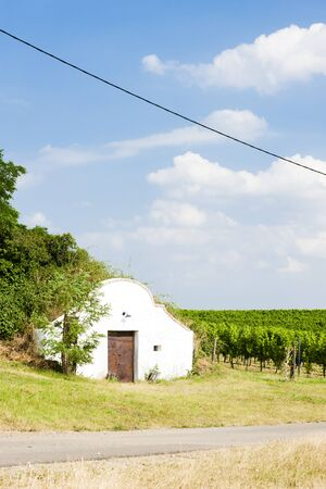 viniculture: wine cellar with vineyard, Novy Prerov, Czech Republic