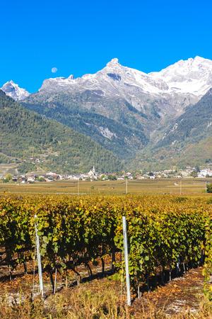 valais: vineyards in Ardon region, canton Valais, Switzerland