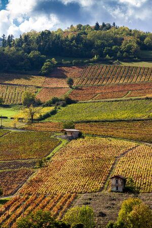 bourgogne: vineyards near Beaujeu, Beaujolais, Rhone-Alpes, France