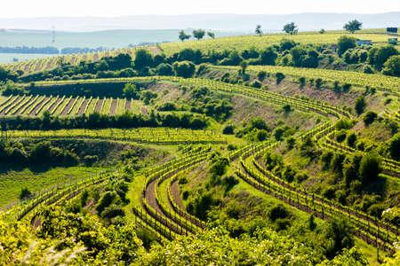 znojmo region: view of vineyard Jecmeniste, Znojmo Region, Czech Republic Stock Photo
