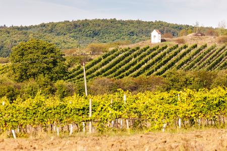 torture: Gods torture near Hnanice with autumnal vineyard, Southern Moravia, Czech Republic