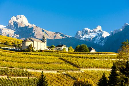 viñedo: viñedos debajo iglesia en Conthey, región de Sion, en el cantón de Valais, Suiza