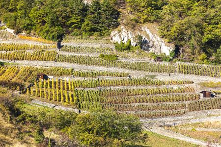 valais: vineyards in Martigny region, canton Valais, Switzerland Stock Photo