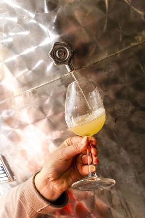 and grape juice: grape juice during wine harvest, Southern Moravia, Czech Republic Stock Photo