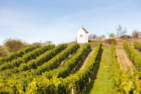 torture: Gods torture near Hnanice with vineyard, Southern Moravia, Czech Republic