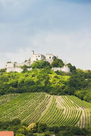 viniculture: ruins of Falkenstein Castle with vineyard, Lower Austria, Austria