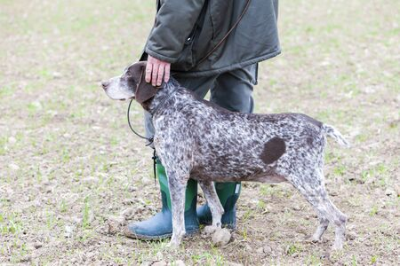 hunting dog: hunting dog with hunter Stock Photo