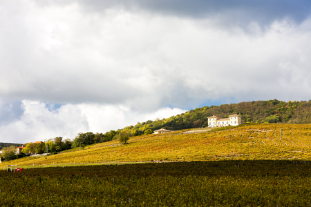 vineyards near Odenas, Beaujolais, Rhone-Alpes, France Stock Photo