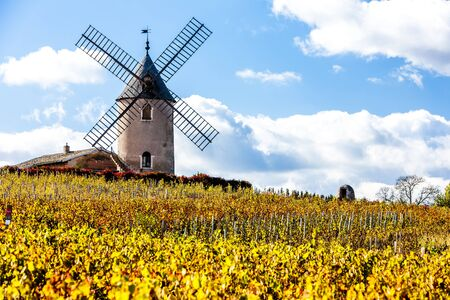 vineyard with windmill near Chenas, Beaujolais, Rhone-Alpes, France Stock Photo
