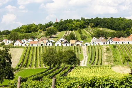 viniculture: wine cellars with vineyards, Galgenberg, Lower Austria, Austria