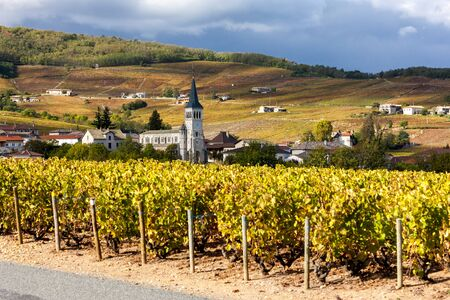Chenas with vineyard, Beaujolais, Rhone-Alpes, France Stock Photo