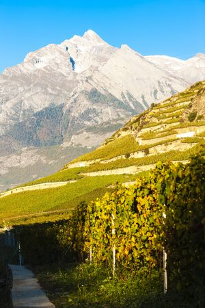 the silence of the world: vineyards near Sion, canton Valais, Switzerland