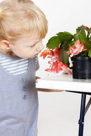 niños rubios: retrato de la pequeña con cactus de Navidad