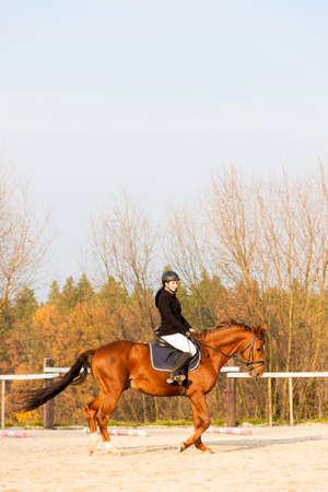 horseback: equestrian on horseback