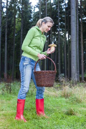 mushroom picking: mushroom picking woman