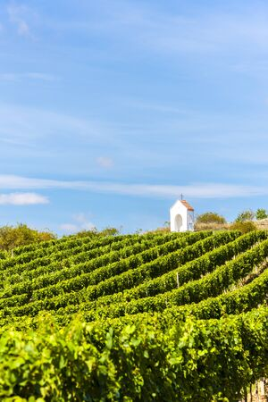 moravia: wayside near Hnanice with vineyard, Southern Moravia, Czech Republic