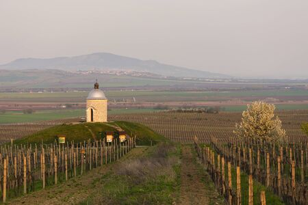 chapel with vineyard near Velke Bilovice, Czech Republic Stock Photo