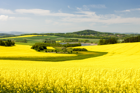 landscape with rape field, Czech Republic 版權商用圖片