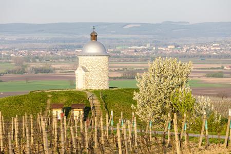 chapel with vineyard near Velke Bilovice, Czech Republic 版權商用圖片