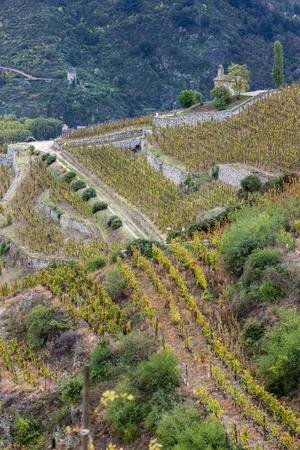 autumn vineyards in Rhona region, France 免版税图像