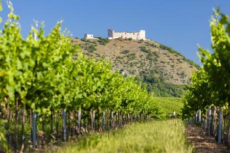 Viñedos, castillo Devicky, Palava, región de Moravia, República Checa