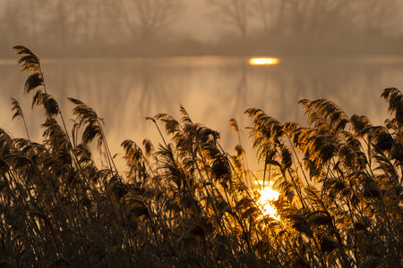 sunrice over Jaroslavice pond, Czech Republic