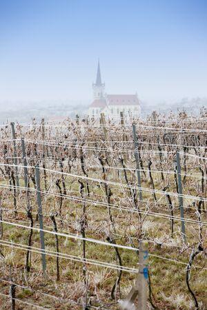 vineyards near Konice, Znojmo region, Czech Republic