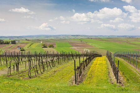 spring vineyard near Retz, Austria
